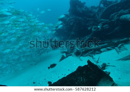 Fishes at underwater wreck  #587628212