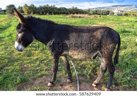 Donkey good and kind #587629409