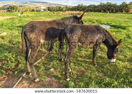 Donkey good and kind #587630015