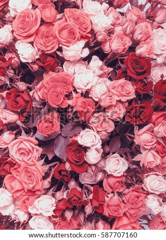 Abstract background of flowers. Faded color tone #587707160