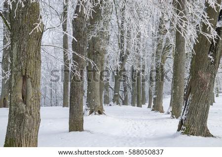 Winter beauty #588050837