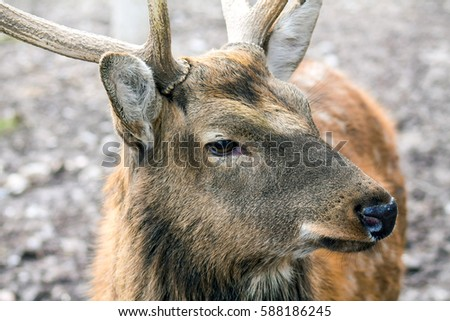 Deer in nature head #588186245
