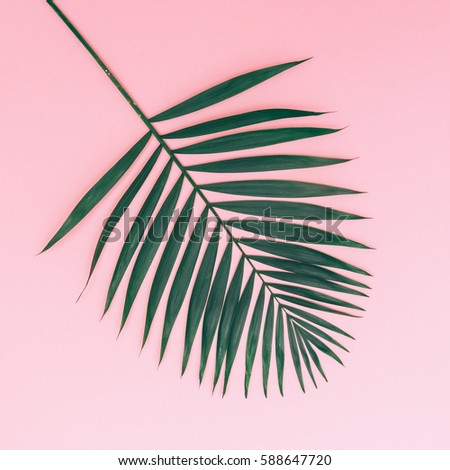palm leaf on a pink background. minimal and flat lay