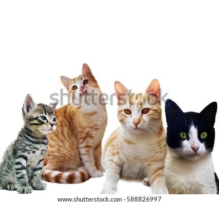Group of kitten on white background #588826997