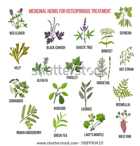 Best medicinal herbs for osteoporosis. Hand drawn set of medicinal herbs #588990410