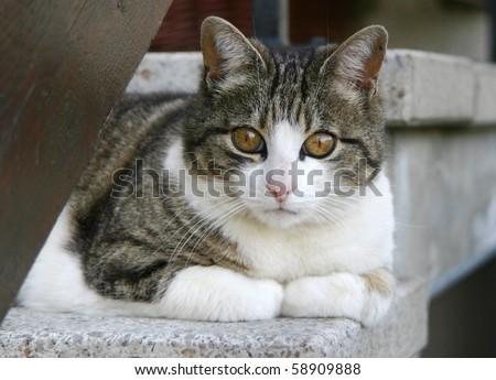 cat on the stairs #58909888