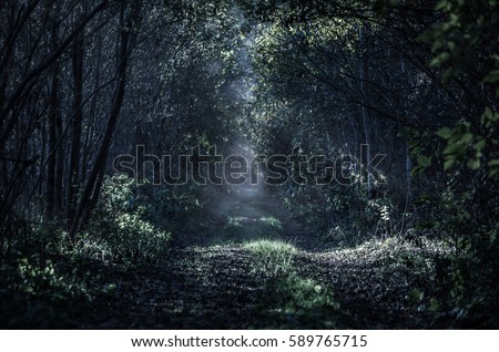 A straight and long path leading through a young forest in the night