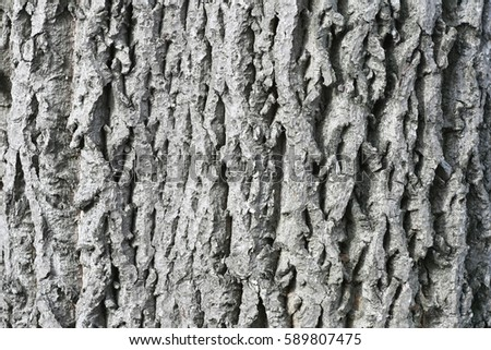 Wood texture. Bark of tree.   #589807475