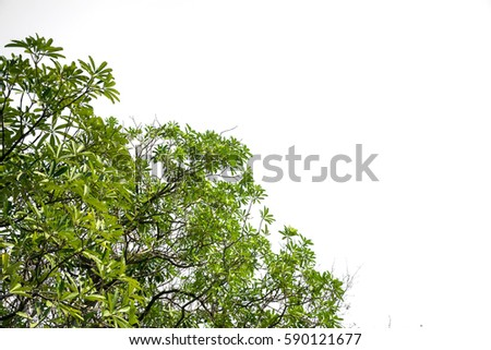 Green leaves and branch  isolated on white background #590121677