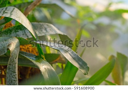 leaves in misty jungle #591608900