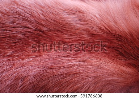 texture fox fur 3 #591786608