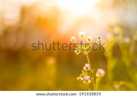 Closeup spring nature landscape. Colorful meadow under sunlight on summer background