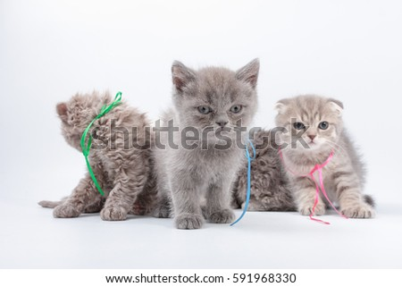 little kittens mixed breed on a white background #591968330