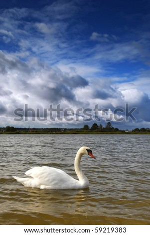 landscape on the lake with swan on water #59219383