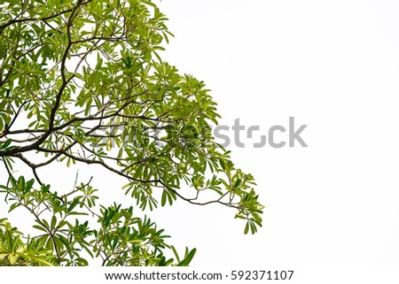 Green leaves isolated on white background #592371107