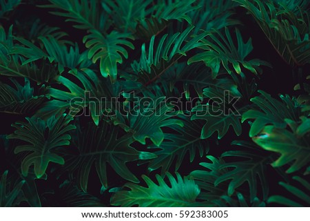 Tropical Fern Bushes Royalty-Free Stock Photo #592383005