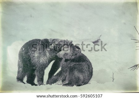 Brown Bears (Ursus arctos) in Lake Clark National Park, Alaska, USA, vintage style #592605107