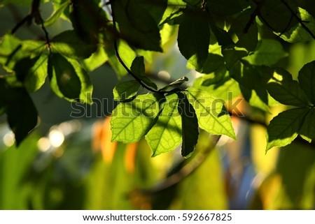 foliage  #592667825