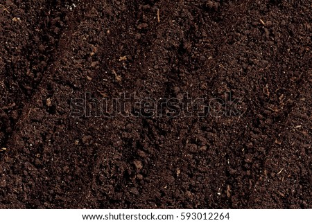 Close-up of organic soil. Can be used as background. #593012264