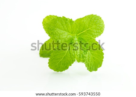 mint leaves isolated on white background #593743550