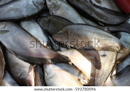 Seafood raw material in the market. #593780096