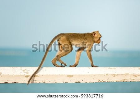 Monkey #593817716