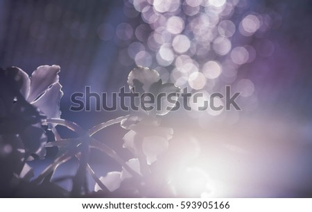 white orchid with blur background and bokeh and hard sunlight #593905166