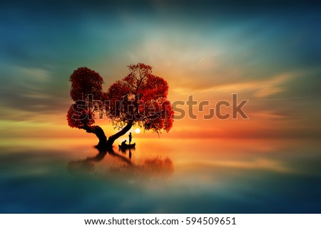 Fishing the sun under a beautiful tree