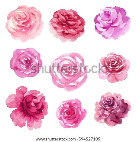 watercolor floral illustration, assorted rose flowers, decorative clip art isolated on white background