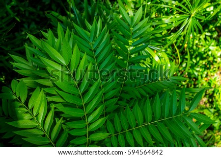 Leafages in some place growing up in green lush. #594564842