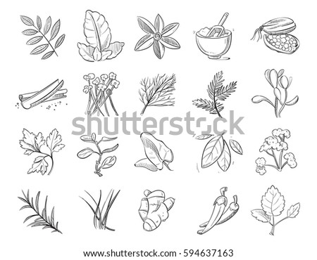 Vintage hand drawn herbs and spices, sketch drawing plants vector collection #594637163