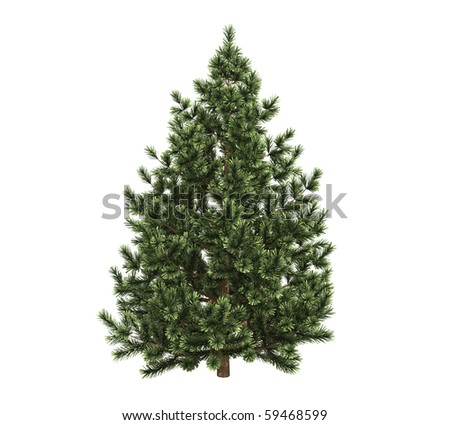 Pine trees isolated on white #59468599