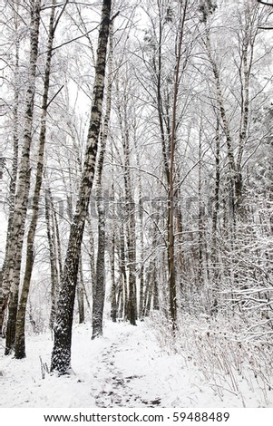 First snow #59488489