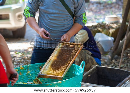 Beekeeper is working with bees and beehives on the apiary #594925937