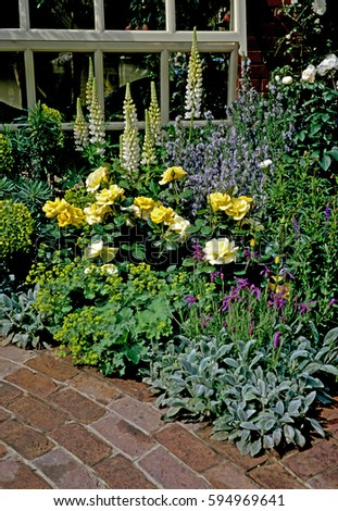 Soft pastel border detail against brick paving in a country garden. #594969641