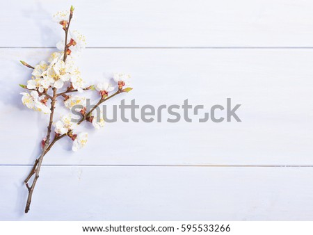 Light lilac wooden background with flowering apricot branches. #595533266