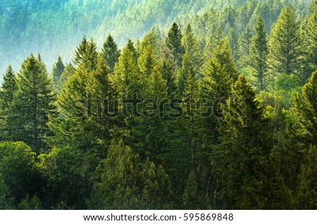 Forest Rain Storm with Drops Falling and Lush Trees #595869848