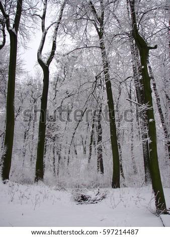 winter trees #597214487