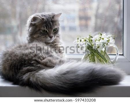 Pretty gray kitty on the windowsill