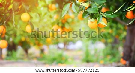 Orange garden #597792125