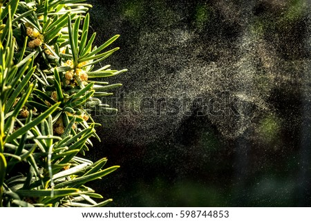 Background with pollen of tree in spingtime Royalty-Free Stock Photo #598744853