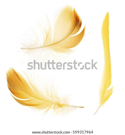 set of feathers isolated on white background #599317964