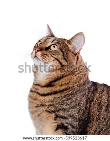 Cat isolated on white background #599523617