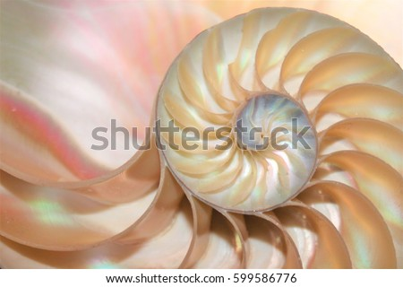 nautilus shell cross section symmetry spiral Fibonacci cross spiral structure growth golden ratio background mollusk half pompilius seashell slice pearl stock, photo, photograph, picture, image,