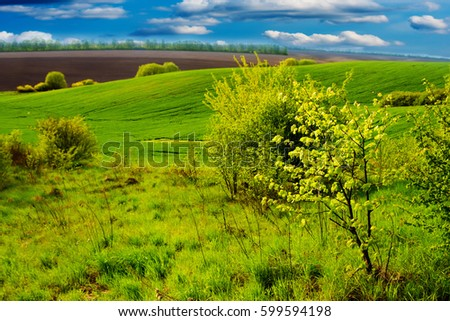 Image of green grass field and bright blue sky #599594198