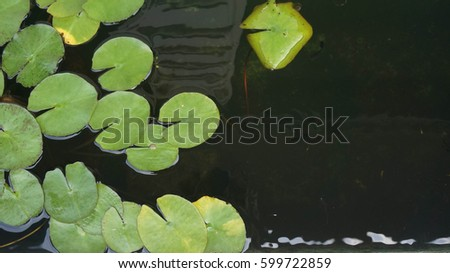 Nymphea leaves on the surface of the water Space for text. #599722859