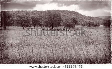 Herd of wild animals on a meadow in Africa. Wildlife of Natural Reserve. National Parks. Wonderful savannah landscape. Amazing vintage. Old photo. Nice background for your text