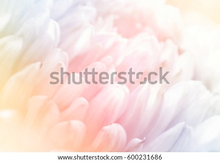 Unfocused blurred aster petals, abstract romance background, pastel and soft flower card #600231686