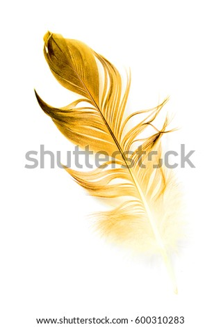 bird feather on white background #600310283