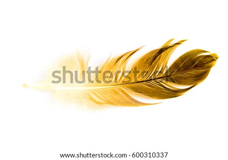 bird feather on white background #600310337